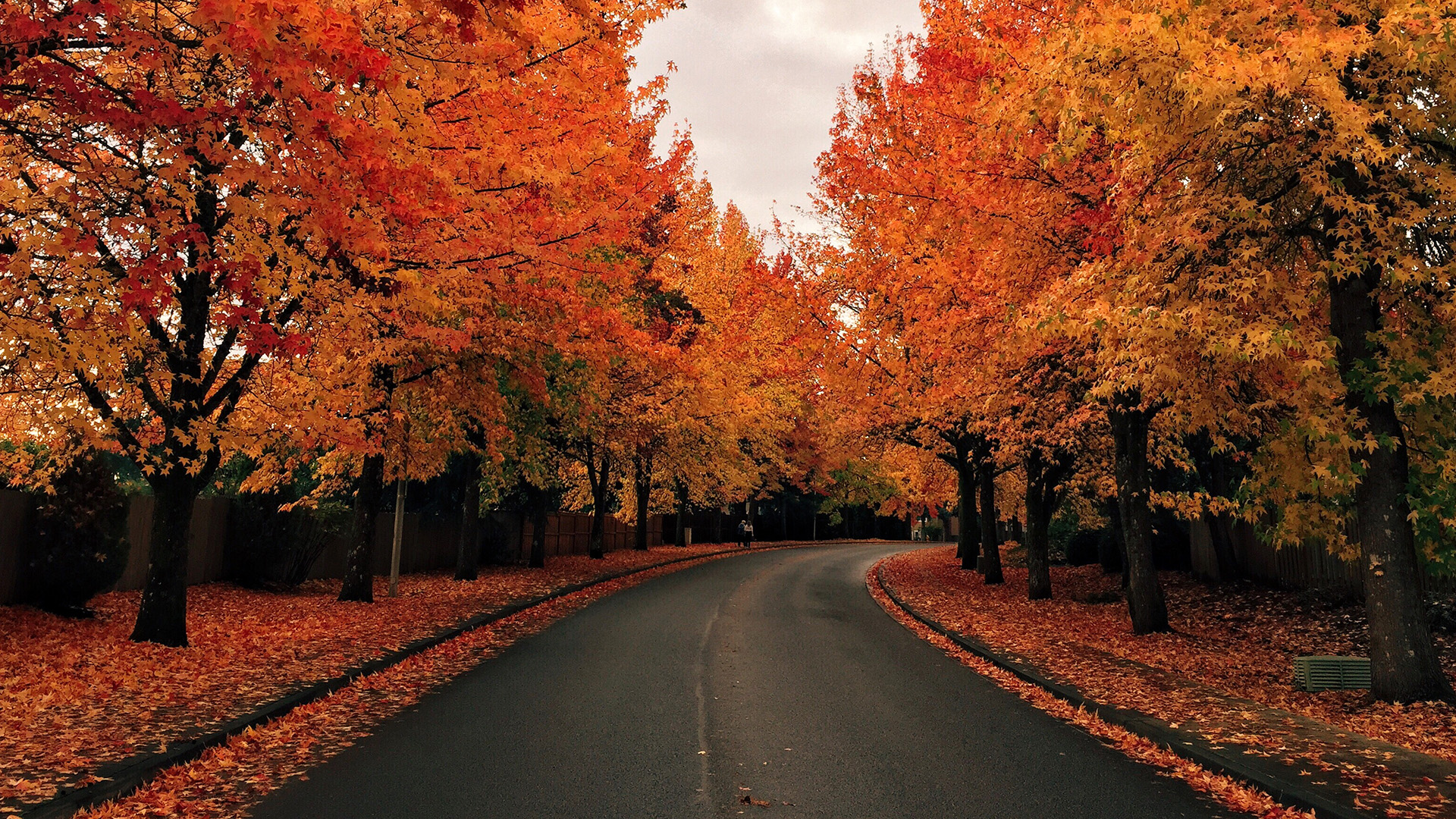 Wallpaper Images Of Fall Trees Lined Lake Tree Lined Road In Autumn Windows 10 Spotlight Images