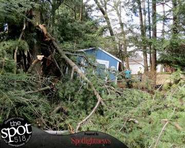 tree down web-9633