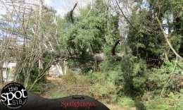 tree down web-9636
