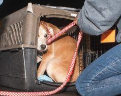 09-07-17 harvey dogs-9183