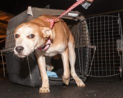 09-07-17 harvey dogs-9185