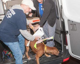 09-07-17 harvey dogs-9193
