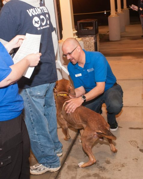 09-07-17 harvey dogs-9196