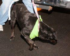 09-07-17 harvey dogs-9288