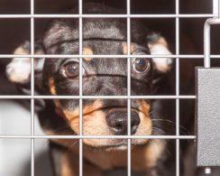 09-07-17 harvey dogs-9349
