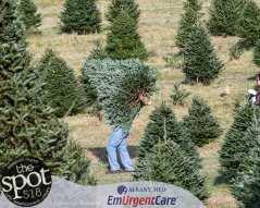 trees-8544