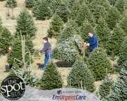 trees-8548