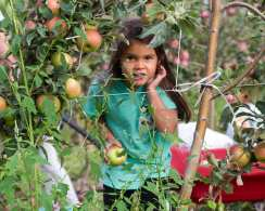 apples web-6421
