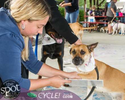 paws in the park-0835