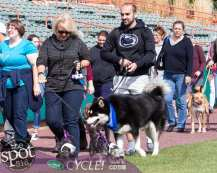 paws in the park-9813