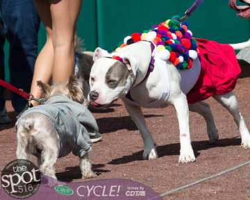 paws in the park-9922