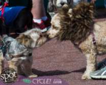 paws in the park-9935