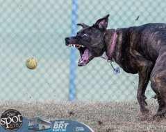 dogpark2-9694