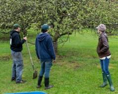 shaker apples web-6879