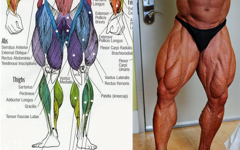 Building Huge Legs Have Never Been This Easy