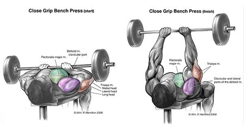 Which Are The Best Exercises for Each Muscle Group?