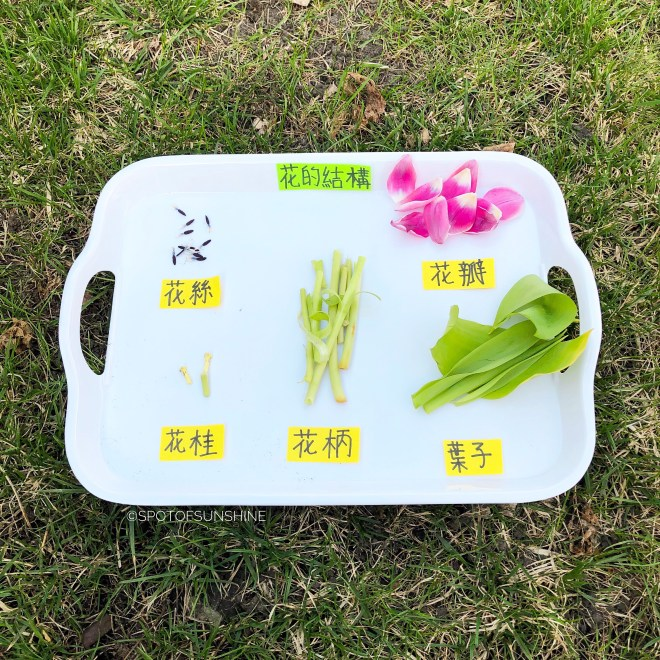 Garden Theme Chinese activities for kids