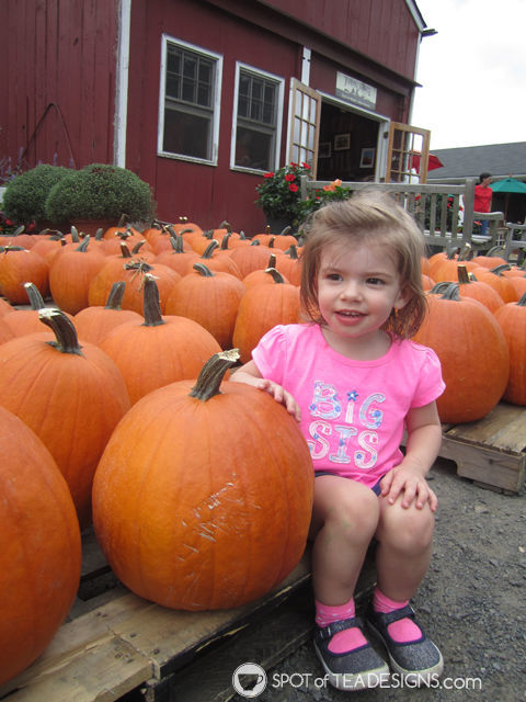 second year of #parenting lessons learned the hard way. #advice - bring a fold up tote to the pumpkin hayride| spotofteadesigns.com