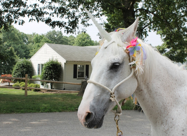 Unicorn birthday party - offer horse rides with a horse dressed up like a unicorn! | spotofteadesigns.com
