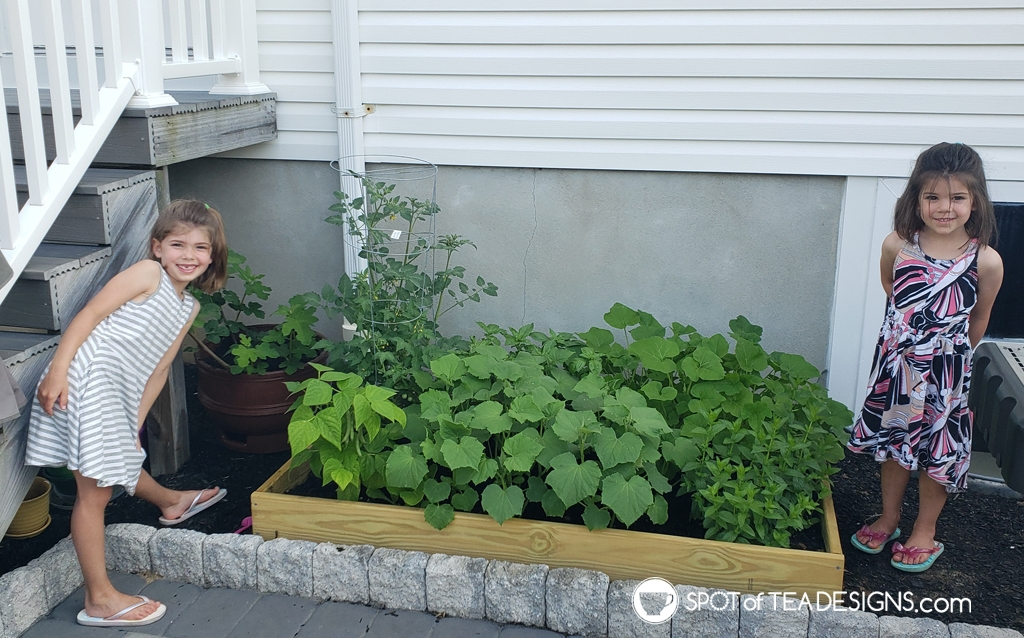 Our Backyard Vegetable Garden - last year's raised bed | spotofteadesigns.com