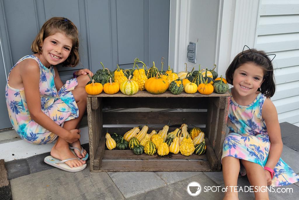 Backyard vegetable garden - first year lessons learned - pumpkins | spotofteadesigns.com