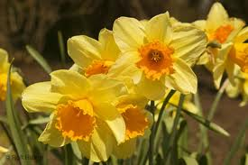 Spring is around the corner!  Fertilize your job search and get going!