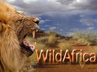 WildAfrica