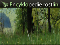 Encyklopedie rostlin