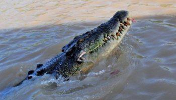 Отец спас 12-летнего сына из пасти крокодила. Он вцепился в рептилию зубами, и та отступила