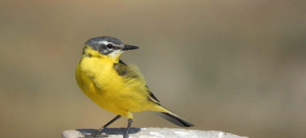 De ce iubim păsările?