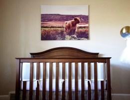 Rowan's UK Nursery 4