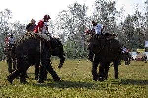 Inače, na Filozofskom će sljedećeg četvrtka biti organizirana zanimljiva debata o tome je li polo na slonovima dovoljno alternativan da bude proglašen sportom vrijednim praćenja ili se radi o nasilju nad životinjama