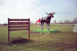 Moose, Karlstad