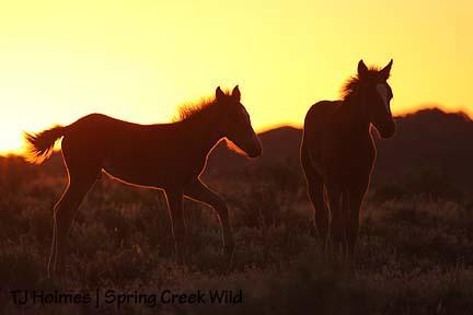 Pinon and Ember at sunset