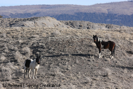 Bruiser and Cinch nearby
