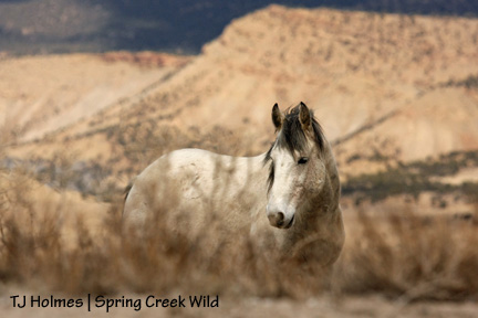 Rose-colored hills, silver stallion