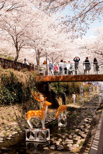 Deers at Yeojwa Stream Romance Bridge