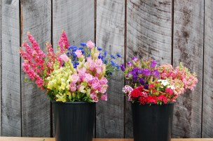 Spring Forth Farm DIY buckets