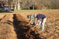 Planting Peonies, April 2014.