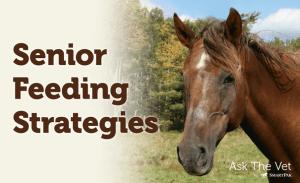 Tuesdays with Tony – Senior Feeding Strategies