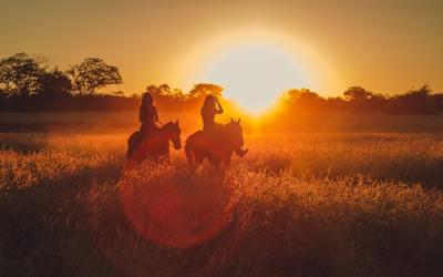 Preparing for Horse Ownership