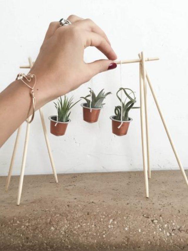 DIY capsules nespresso plantes