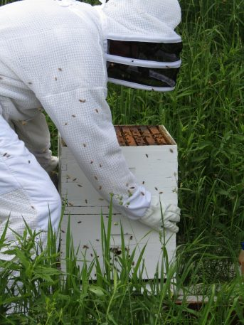 Bees: Part 3
