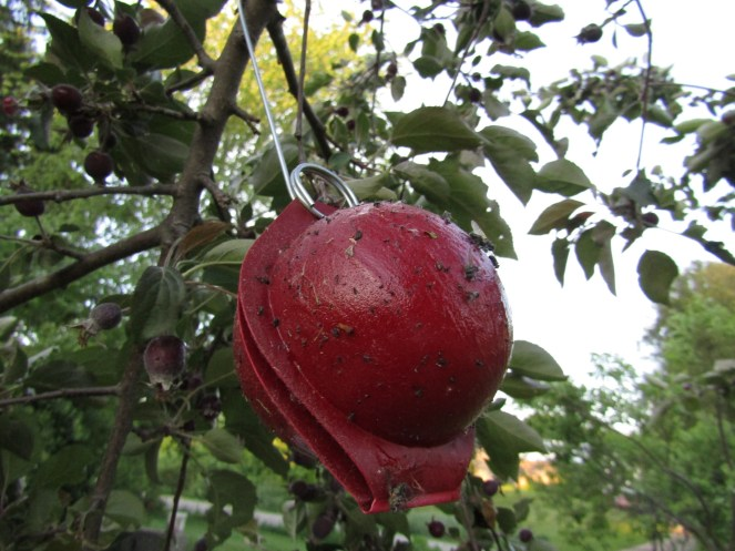 Apple traps for natural pest protection
