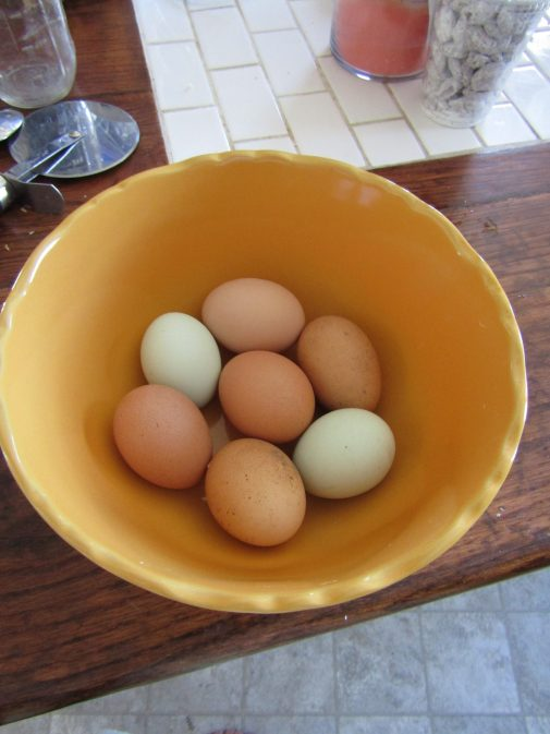 Homesteading in Wisconsin: March