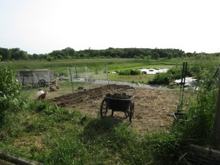 Here is the bed after the chickens had worked it for a couple of weeks.