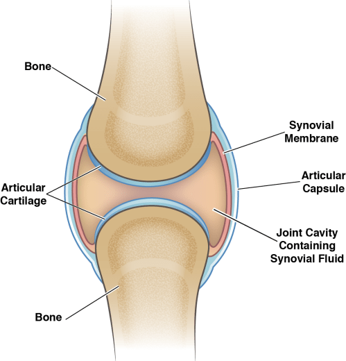 small resolution of knee joint cavity diagram