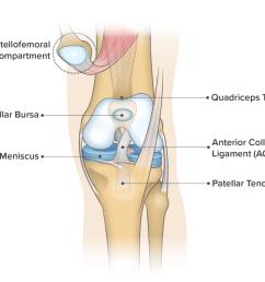 knee anatomy frontal view [ 1024 x 853 Pixel ]