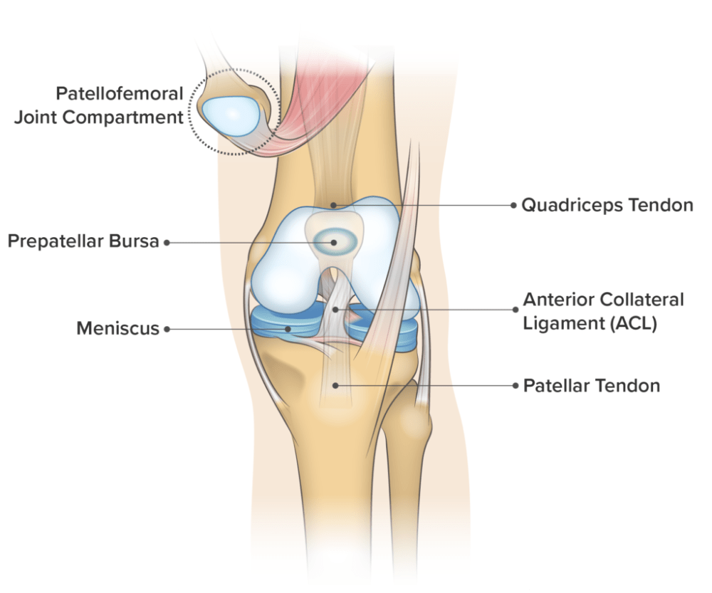 medium resolution of knee anatomy frontal view