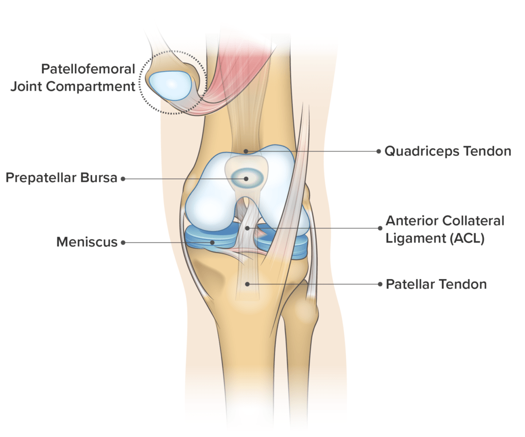 hight resolution of knee anatomy frontal view
